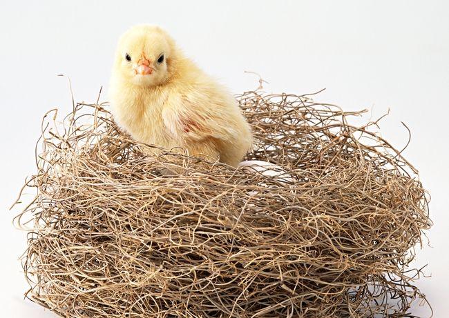 家禽价格有望保持上升态势