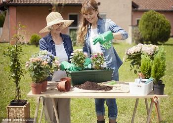 家庭园艺市场期待创意 创意产品供不应求
